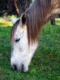 άλογο παλαιό Στοκ Φωτογραφίες
