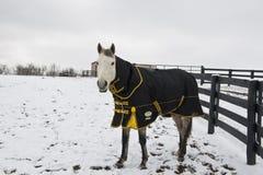 άλογο παλτών που φορά το χειμώνα Στοκ Εικόνες