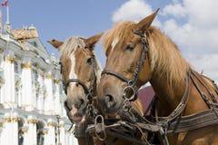 άλογο Πετρούπολη ST Στοκ Εικόνες