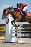 άλογο πηδώντας pezinok Σλοβακί στοκ φωτογραφίες