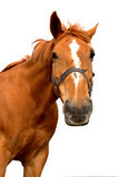 άλογο που απομονώνεται Στοκ φωτογραφία με δικαίωμα ελεύθερης χρήσης