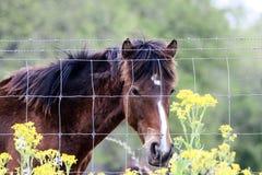 Άλογο που κοιτάζει μέσω της φραγής Στοκ Εικόνα