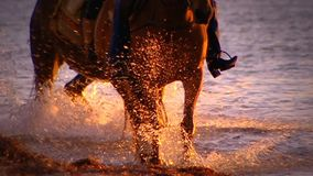 Άλογο που περπατά μέσω του ωκεανού φιλμ μικρού μήκους