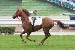 Άλογο που τρέχει στη διαδρομή στοκ εικόνες