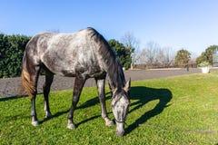 Άλογο που τρώει την κινηματογράφηση σε πρώτο πλάνο χώρων άμμου χλόης στοκ φωτογραφίες
