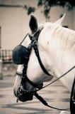 άλογο Πράγα Στοκ Φωτογραφίες