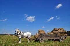 άλογο σανού κάρρων δεμάτω&nu Στοκ φωτογραφία με δικαίωμα ελεύθερης χρήσης
