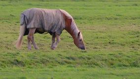 Άλογο σε ένα αγρόκτημα απόθεμα βίντεο