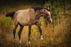 Άλογο σε ένα λιβάδι Υπαίθριο φυσικό φως στοκ φωτογραφίες