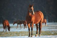 Άλογο σε ένα χειμερινό τοπίο στο σούρουπο στοκ φωτογραφία με δικαίωμα ελεύθερης χρήσης