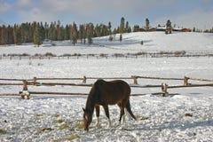 Άλογο σε μια οριζόντια χειμερινή θέα βουνού του Winter Park, Κολοράντο Στοκ Φωτογραφία