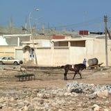 Άλογο σε Apollonia Στοκ φωτογραφία με δικαίωμα ελεύθερης χρήσης