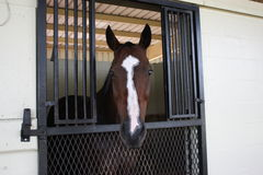 άλογο σιταποθηκών Στοκ εικόνα με δικαίωμα ελεύθερης χρήσης