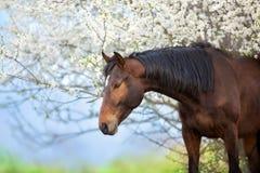 Άλογο στην άνθιση άνοιξη στοκ φωτογραφίες με δικαίωμα ελεύθερης χρήσης