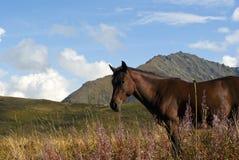 άλογο στην ελεύθερη βοσκή στα βουνά φθινοπώρου Στοκ φωτογραφία με δικαίωμα ελεύθερης χρήσης