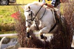 Άλογο στη φραγή Α στοκ φωτογραφία με δικαίωμα ελεύθερης χρήσης