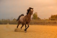 Άλογο στη φύση Πορτρέτο ενός αλόγου, καφετί άλογο Στοκ φωτογραφία με δικαίωμα ελεύθερης χρήσης