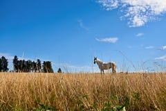 Άλογο στη χλόη Στοκ εικόνες με δικαίωμα ελεύθερης χρήσης