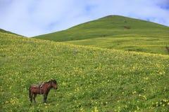 Άλογο στο λιβάδι με το μπλε ουρανό στοκ φωτογραφία