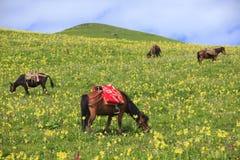 Άλογο στο λιβάδι με το μπλε ουρανό στοκ εικόνα με δικαίωμα ελεύθερης χρήσης
