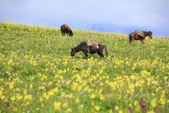 Άλογο στο λιβάδι με το μπλε ουρανό στοκ φωτογραφία με δικαίωμα ελεύθερης χρήσης