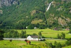 Άλογο στο λιβάδι χλόης στο τοπίο βουνών σε Flam, Νορβηγία Άλογο την πράσινη ηλιόλουστη ημέρα λιβαδιών Θερινό τοπίο με Στοκ Εικόνες