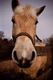 άλογο συμπαθητικό Στοκ Φωτογραφίες