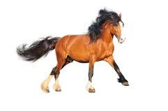 άλογο σχεδίων που απομ&omicro Στοκ Φωτογραφία