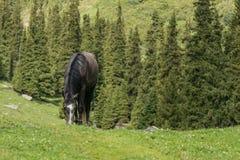 Άλογο του Κιργισίου στο αλπικό τοπίο κοντά στη λίμνη Alakol, Altyn Arashan, ένας δημοφιλής προορισμός πεζοπορίας κοντά σε Karakol στοκ φωτογραφία με δικαίωμα ελεύθερης χρήσης