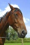 άλογο φραγών που κλίνει πέ& Στοκ Εικόνα
