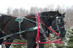 Άλογο Χριστουγέννων τη χιονώδη ΗΜΕΡΑ Στοκ Εικόνα