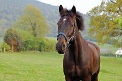 άλογο χωρών Στοκ Εικόνα