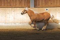 άλογο 0018 Στοκ Φωτογραφίες