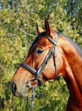 άλογο Στοκ φωτογραφία με δικαίωμα ελεύθερης χρήσης