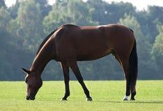 άλογο Στοκ Φωτογραφίες