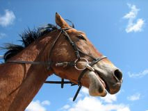 άλογο Στοκ Φωτογραφία