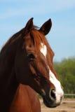 άλογο Στοκ εικόνα με δικαίωμα ελεύθερης χρήσης