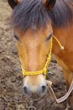 άλογο Στοκ φωτογραφίες με δικαίωμα ελεύθερης χρήσης