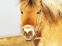 Άλογο 25 Στοκ Φωτογραφία