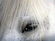Άλογο 3 Στοκ Εικόνες