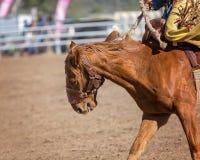 Άλογο Bucking Bronc για να αποσπάσει τον αναβάτη κατά τη διάρκεια του ανταγωνισμού ροντέο Στοκ φωτογραφία με δικαίωμα ελεύθερης χρήσης