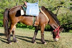άλογο jpg Στοκ Εικόνα
