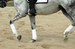 άλογο ridng Στοκ Φωτογραφίες