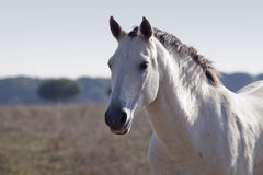 άλογο s ματιών στοκ εικόνα με δικαίωμα ελεύθερης χρήσης