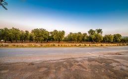 Άλση ελιών Apulian Στοκ Φωτογραφίες