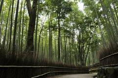 Άλσος μπαμπού σε Arashiyama στο Κιότο, Ιαπωνία Στοκ εικόνα με δικαίωμα ελεύθερης χρήσης