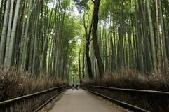 Άλσος μπαμπού σε Arashiyama στο Κιότο, Ιαπωνία Στοκ Εικόνες