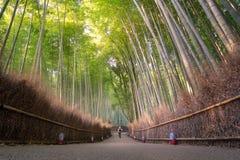 Άλσος μπαμπού στην εποχή φθινοπώρου σε Arashiyama στο Κιότο Στοκ Φωτογραφίες