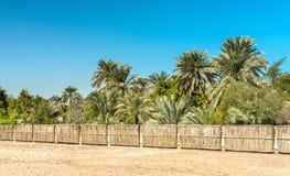 Άλσος Parm στο οχυρό του Μπαχρέιν Μια περιοχή παγκόσμιων κληρονομιών της ΟΥΝΕΣΚΟ Στοκ Εικόνα