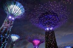 Άλσος Supertrees στους κήπους από τον κόλπο, στη Σιγκαπούρη στοκ εικόνες